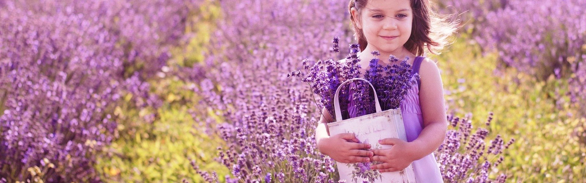 lavender-flowers-background_09273432